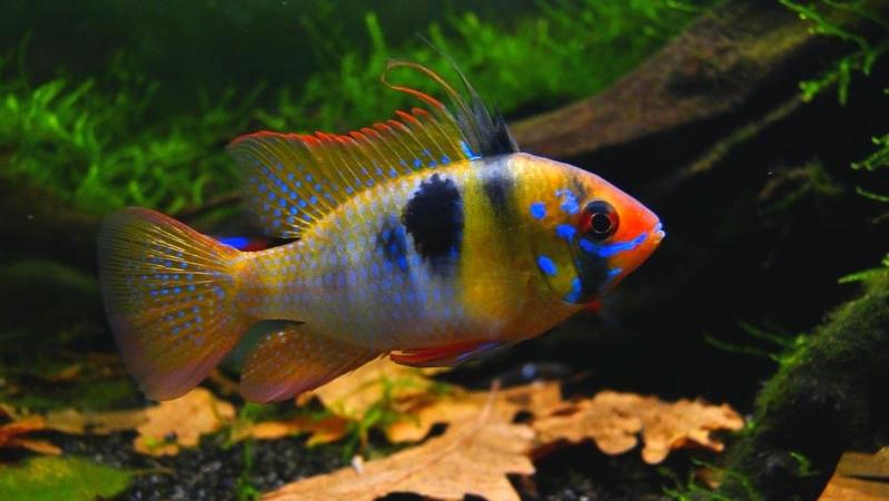 Рыбка на дне