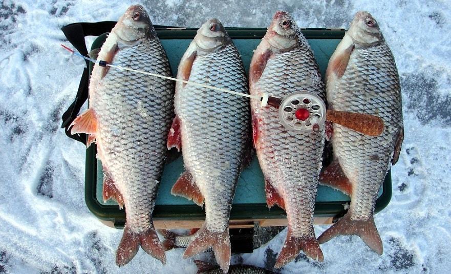 Четыре крупных рыбы